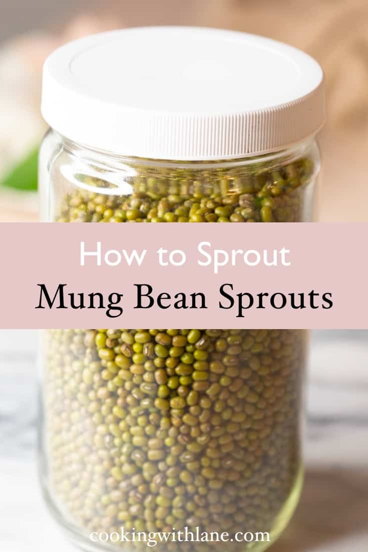 how to sprout bean sprouts