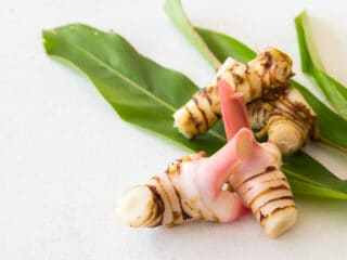all about galangal