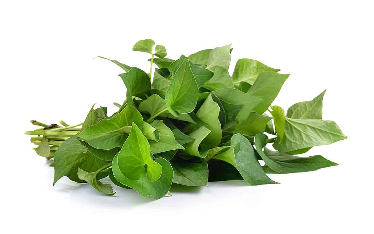 fish mint vietnamese herb